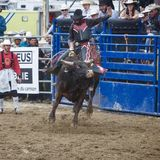 Bullrider from Baie-Comeau | Man | 41 years old | Aries